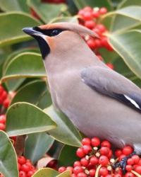 Vögel und Insekten