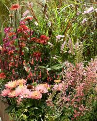 02. Beet und Balkonpflanzen/ Herbstsortiment