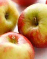 10. Obstgehölze
