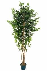 Ficus künstlich