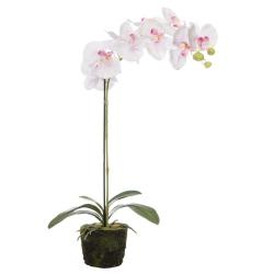 Orchidee künstlich Rose