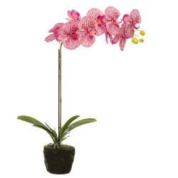 Orchidee künstlich Pink