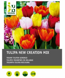 Tulpenmischung Triumph