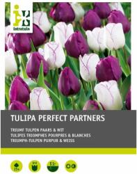 Tulpenmischung Lila/Weiss